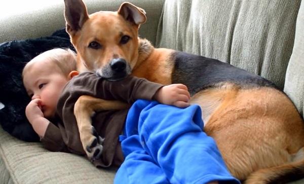 Woofland - Αστείες φωτογραφίες σκύλων με τα αδέρφια τους - Γουφαμάρες 7