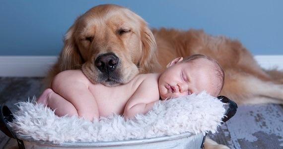 Woofland - Αστείες φωτογραφίες σκύλων με τα αδέρφια τους - Γουφαμάρες 9