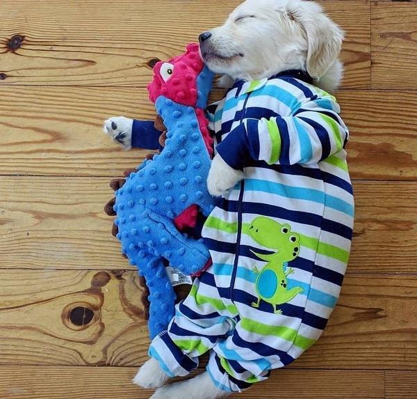 Woofland - Αστείες φωτογραφίες σκύλων με τα παιχνίδια τους - Γουφαμάρες 2