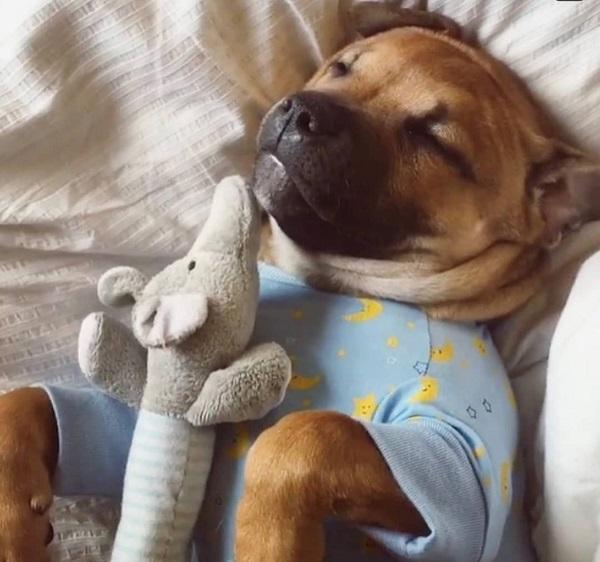 Woofland - Αστείες φωτογραφίες σκύλων με τα παιχνίδια τους - Γουφαμάρες 3