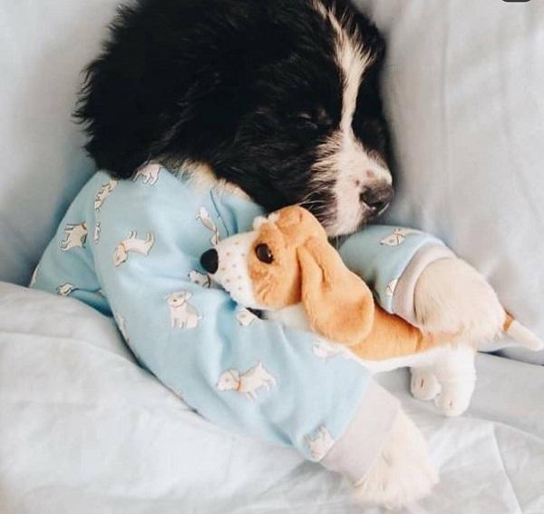 Woofland - Αστείες φωτογραφίες σκύλων με τα παιχνίδια τους - Γουφαμάρες 5