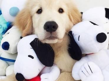 Αστείες φωτογραφίες σκύλων με τα παιχνίδια τους – Γουφαμάρες