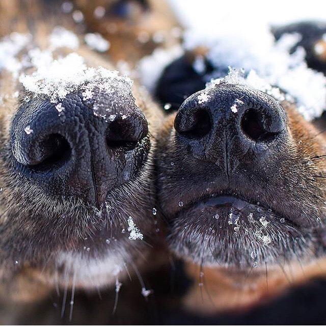 Αστείες φωτογραφίες σκύλων με τις μύτες τους – Γουφαμάρες