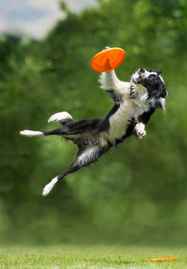 Woofland - Αστείες φωτογραφίες σκύλων με frisbie - Γουφαμάρες 1