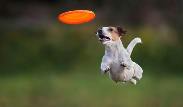 Woofland - Αστείες φωτογραφίες σκύλων με frisbie - Γουφαμάρες 5