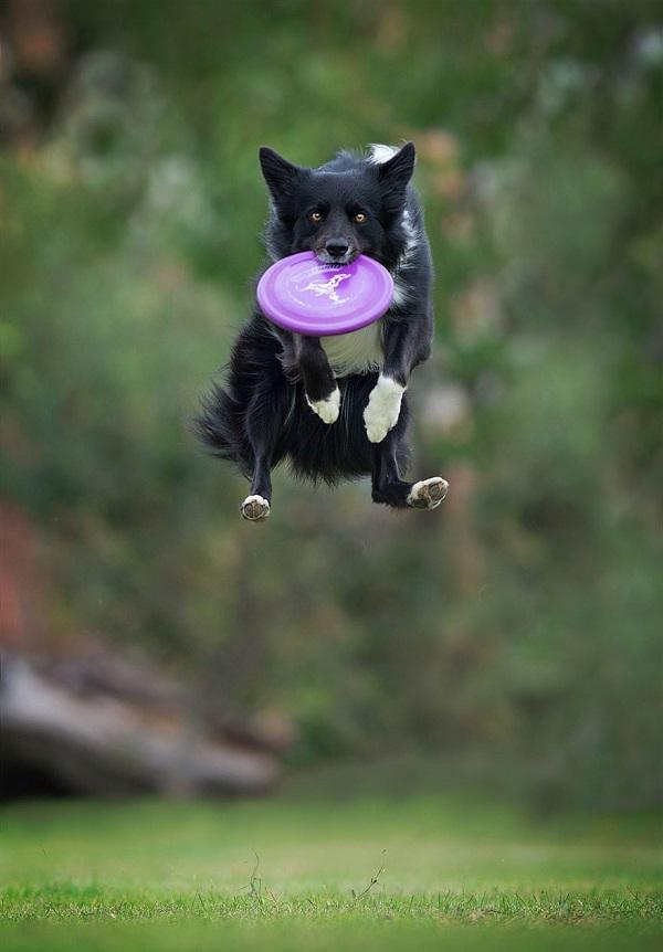 Woofland - Αστείες φωτογραφίες σκύλων με frisbie - Γουφαμάρες 2