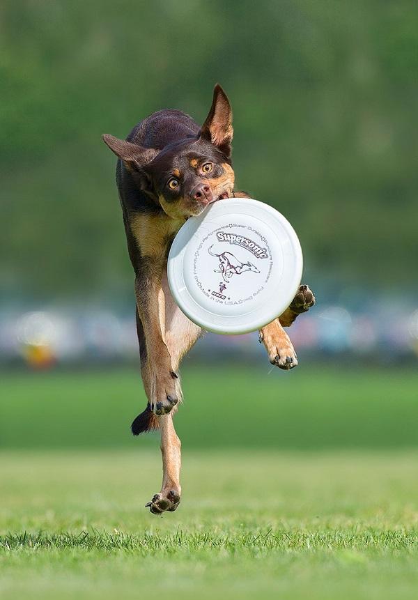 Woofland - Αστείες φωτογραφίες σκύλων με frisbie - Γουφαμάρες 3