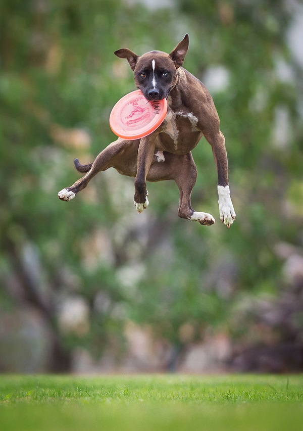 Woofland - Αστείες φωτογραφίες σκύλων με frisbie - Γουφαμάρες 4