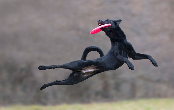 Woofland - Αστείες φωτογραφίες σκύλων με frisbie - Γουφαμάρες 7