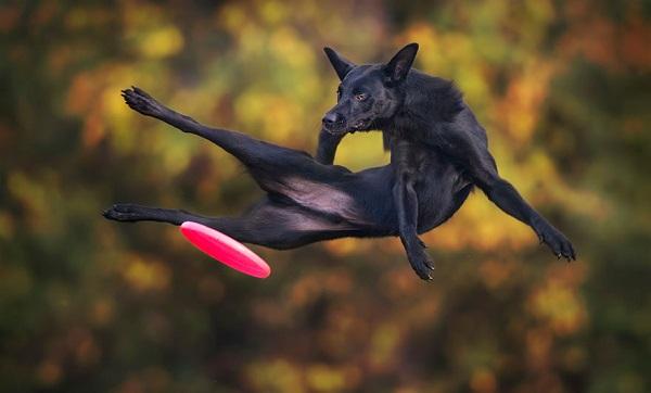 Woofland - Αστείες φωτογραφίες σκύλων με frisbie - Γουφαμάρες 8