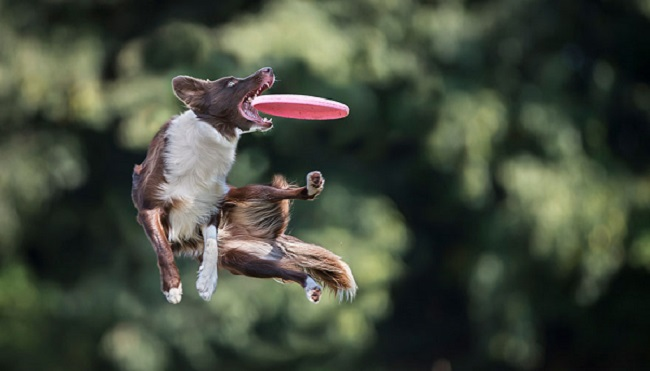 Αστείες φωτογραφίες σκύλων  με Frisbie – Γουφαμάρες Woofland