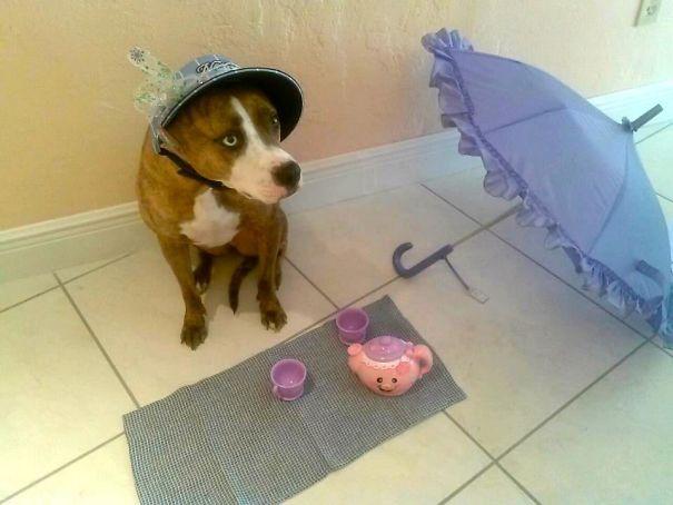 Woofland - Αστείες φωτογραφίες σκύλων που έμειναν μόνοι με παιδιά - Γουφαμάρες 1