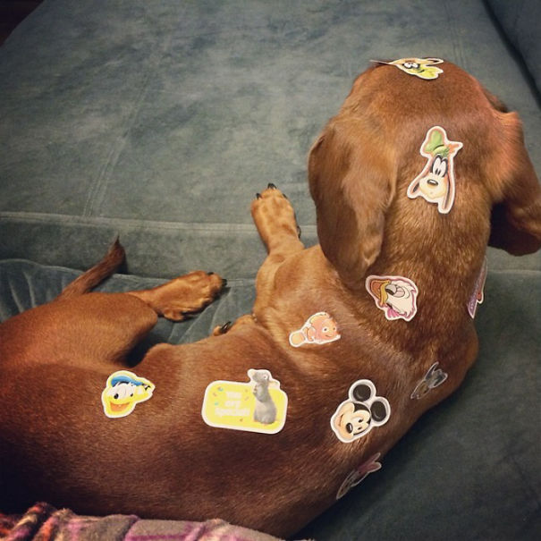 Woofland - Αστείες φωτογραφίες σκύλων που έμειναν μόνοι με παιδιά - Γουφαμάρες 10