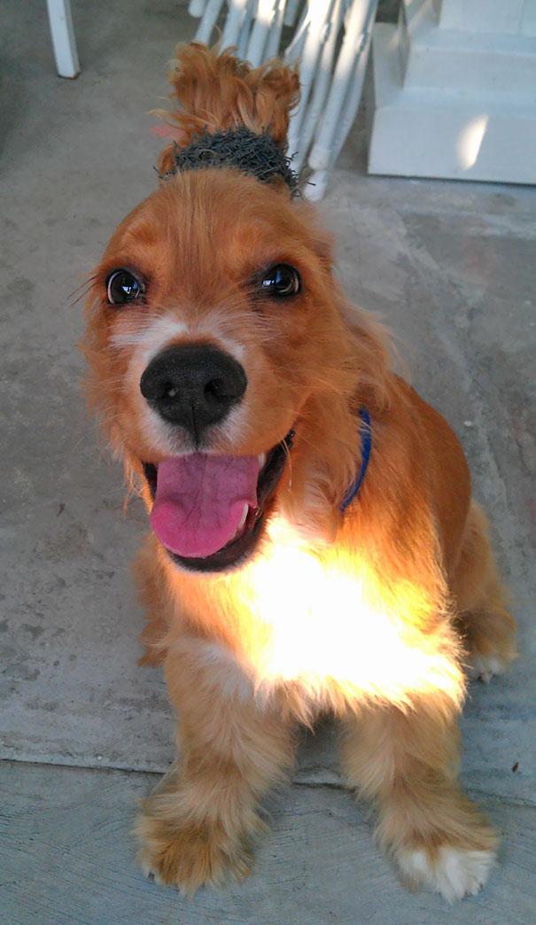 Woofland - Αστείες φωτογραφίες σκύλων που έμειναν μόνοι με παιδιά - Γουφαμάρες 4