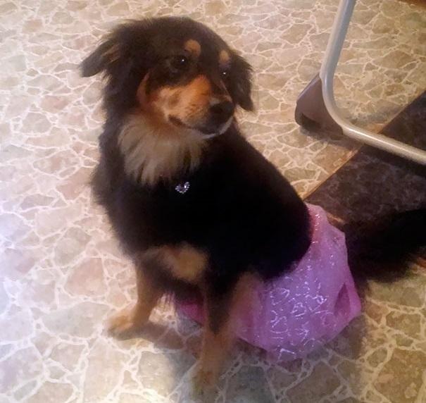 Woofland - Αστείες φωτογραφίες σκύλων που έμειναν μόνοι με παιδιά - Γουφαμάρες 7
