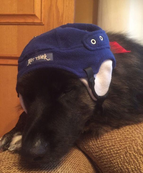 Woofland - Αστείες φωτογραφίες σκύλων που έμειναν μόνοι με παιδιά - Γουφαμάρες 8