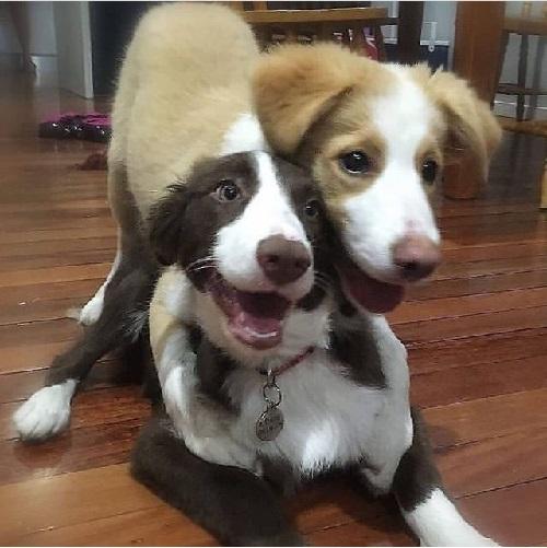 Woofland - Αστείες φωτογραφίες σκύλων που αγκαλιάζονται - Γουφαμάρες 1b
