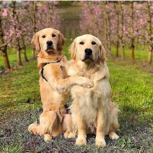 Woofland - Αστείες φωτογραφίες σκύλων που αγκαλιάζονται - Γουφαμάρες 2b