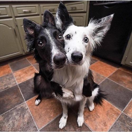 Woofland - Αστείες φωτογραφίες σκύλων που αγκαλιάζονται - Γουφαμάρες 3b