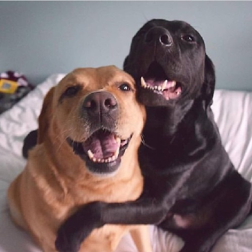 Woofland - Αστείες φωτογραφίες σκύλων που αγκαλιάζονται - Γουφαμάρες 4b