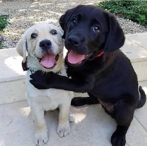 Woofland - Αστείες φωτογραφίες σκύλων που αγκαλιάζονται - Γουφαμάρες 5b