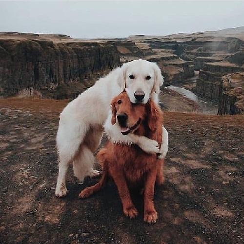 Woofland - Αστείες φωτογραφίες σκύλων που αγκαλιάζονται - Γουφαμάρες 7b