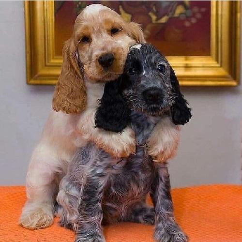 Αστείες φωτογραφίες σκύλων που αγκαλιάζονται 2 – Γουφαμάρες