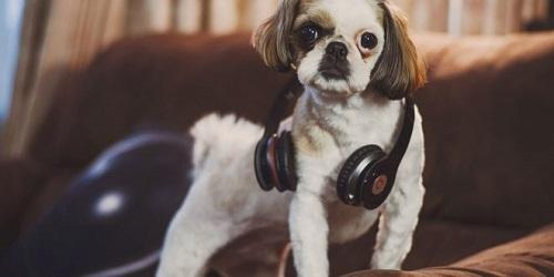 Woofland - Αστείες φωτογραφίες σκύλων που ακούν μουσική - Γουφαμάρες 9