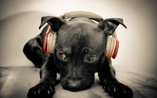 Woofland - Αστείες φωτογραφίες σκύλων που ακούν μουσική - Γουφαμάρες 1