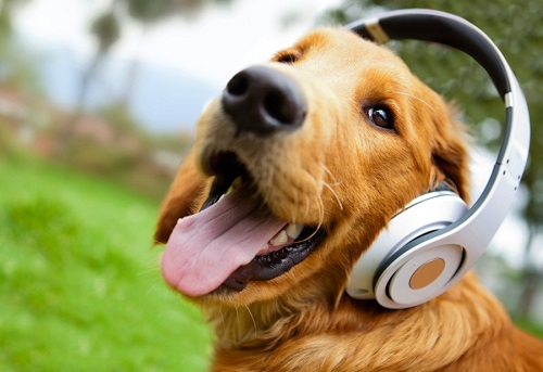 Woofland - Αστείες φωτογραφίες σκύλων που ακούν μουσική - Γουφαμάρες