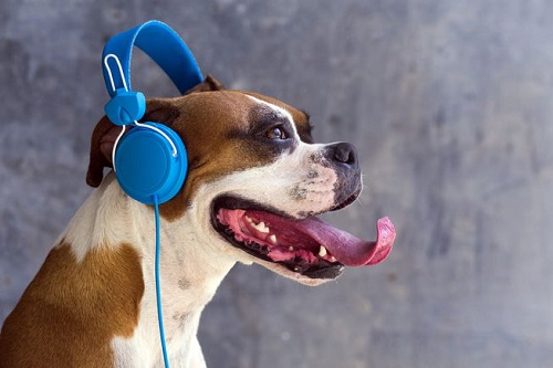 Woofland - Αστείες φωτογραφίες σκύλων που ακούν μουσική - Γουφαμάρες 3