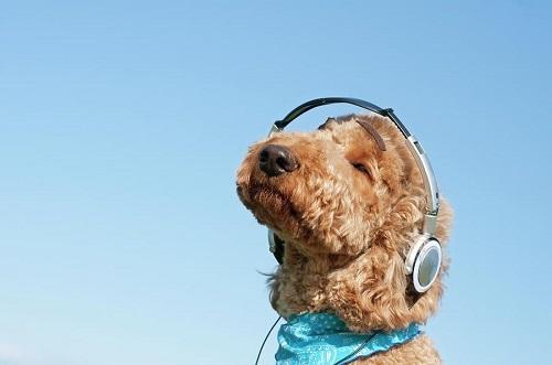 Woofland - Αστείες φωτογραφίες σκύλων που ακούν μουσική - Γουφαμάρες 4