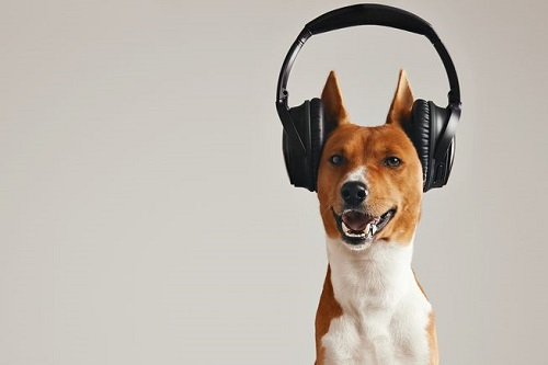 Woofland - Αστείες φωτογραφίες σκύλων που ακούν μουσική - Γουφαμάρες 6