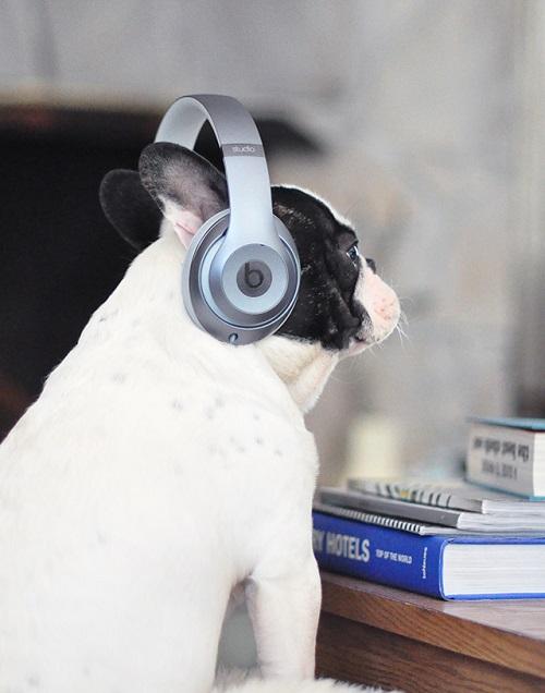 Woofland - Αστείες φωτογραφίες σκύλων που ακούν μουσική - Γουφαμάρες 7