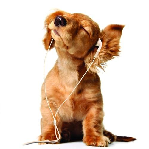 Woofland - Αστείες φωτογραφίες σκύλων που ακούν μουσική - Γουφαμάρες 8