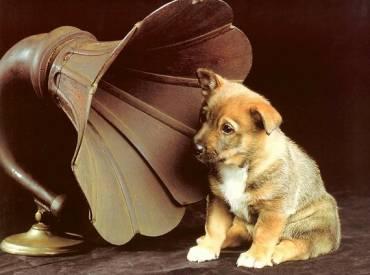 Αστείες φωτογραφίες σκύλων που ακούν μουσική – Γουφαμάρες