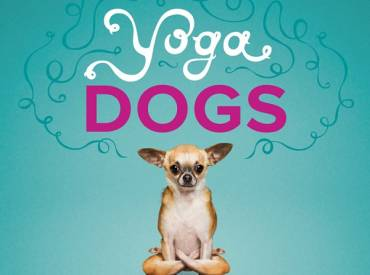 Αστείες φωτογραφίες σκύλων που κάνουν yoga – Γουφαμάρες