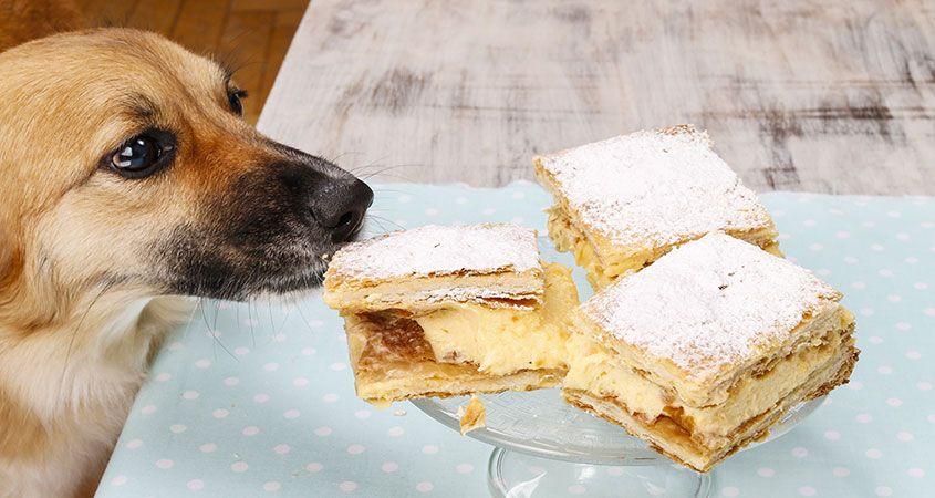 Woofland - Αστείες φωτογραφίες σκύλων που κλέβουν φαγητό - Γουφαμάρες 1