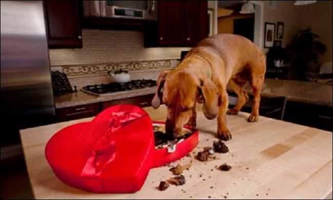 Woofland - Αστείες φωτογραφίες σκύλων που κλέβουν φαγητό - Γουφαμάρες 8