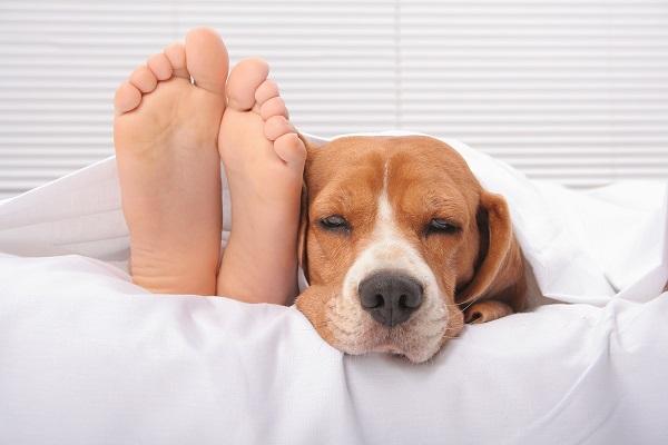 Woofland - Αστείες φωτογραφίες σκύλων που κοιμούνται μαζί μας - Γουφαμάρες 1