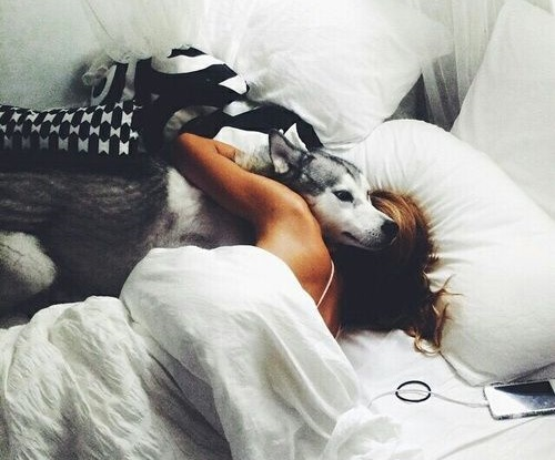Woofland - Αστείες φωτογραφίες σκύλων που κοιμούνται μαζί μας - Γουφαμάρες 10