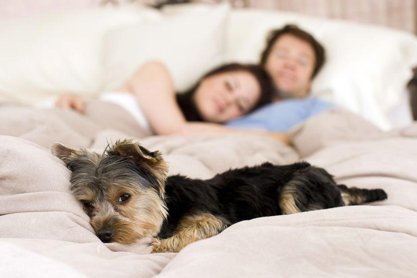 Woofland - Αστείες φωτογραφίες σκύλων που κοιμούνται μαζί μας - Γουφαμάρες 2