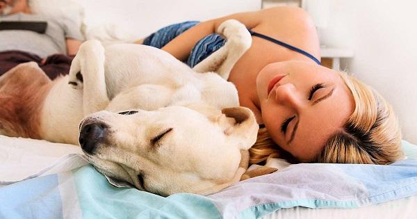 Woofland - Αστείες φωτογραφίες σκύλων που κοιμούνται μαζί μας - Γουφαμάρες 3