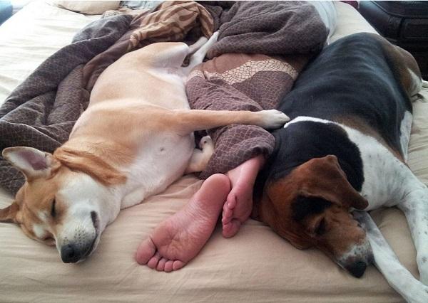 Woofland - Αστείες φωτογραφίες σκύλων που κοιμούνται μαζί μας - Γουφαμάρες 4