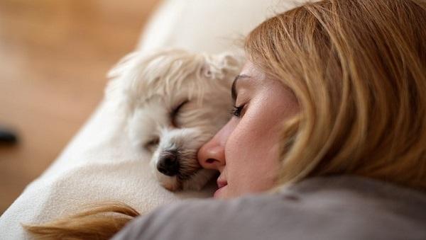 Woofland - Αστείες φωτογραφίες σκύλων που κοιμούνται μαζί μας - Γουφαμάρες 5