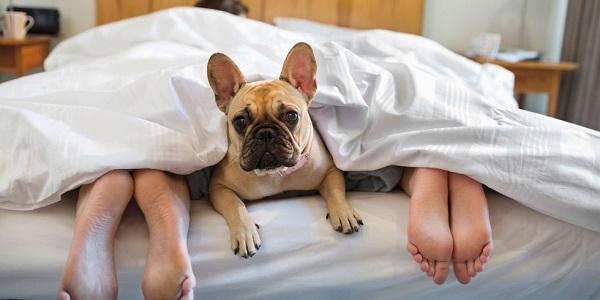 Woofland - Αστείες φωτογραφίες σκύλων που κοιμούνται μαζί μας - Γουφαμάρες 7