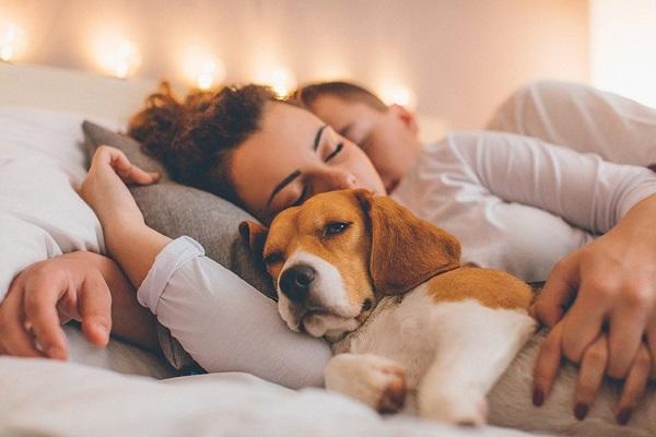 Woofland - Αστείες φωτογραφίες σκύλων που κοιμούνται μαζί μας - Γουφαμάρες 8