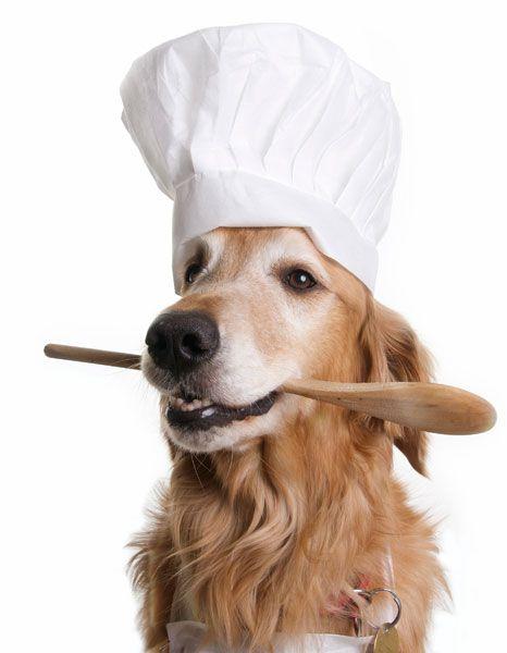 Woofland - Αστείες φωτογραφίες σκύλων που μαγειρεύουν - Γουφαμάρες6