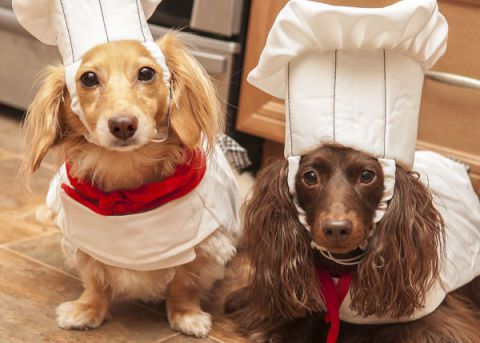 Woofland - Αστείες φωτογραφίες σκύλων που μαγειρεύουν - Γουφαμάρες 8