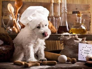 Αστείες φωτογραφίες σκύλων που μαγειρεύουν – Woofland